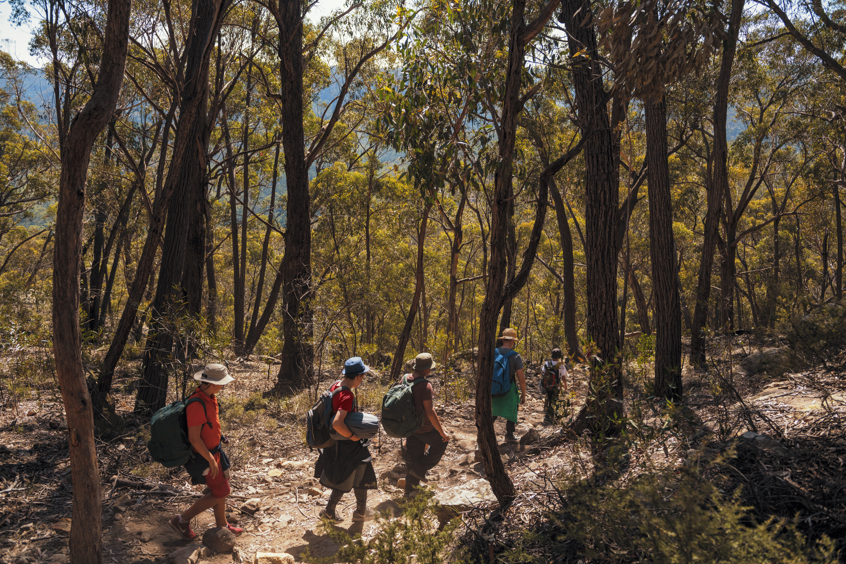 C&T Bushwalking WOM-LP - image2