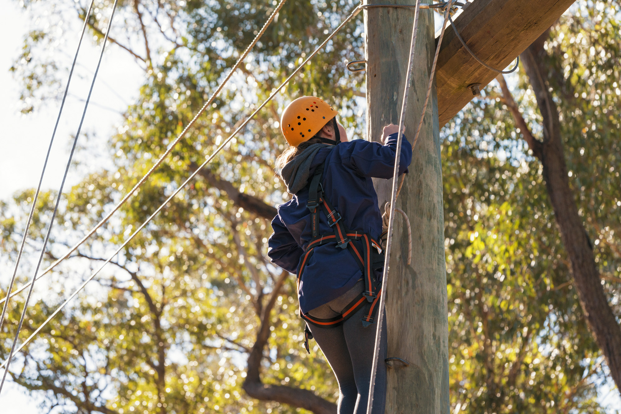 C&T High Ropes-LP - image gallery1